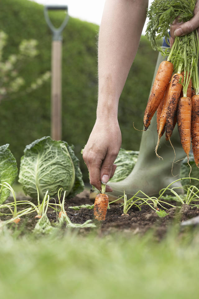 Learn How To Plant, Grow, Harvest And Prepare Your Own Food At A  CommonWealth