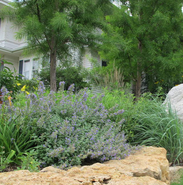Tried and true native plants to use in the garden news ok bald cypress big bluestem large coneflower and catmint are a few of the native publicscrutiny Image collections